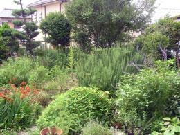 ハーブ菜園