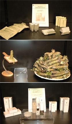 アンチエイジングな伝統食材「ワサビ」の機能を活かした商品