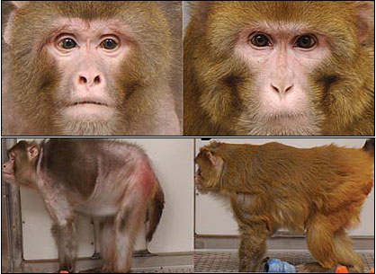 「サーチュイン遺伝子 猿」の画像検索結果